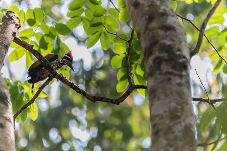 pies bonitos: Woodpecker is a bird of a very unique place. It is the only bird that has a living tree hollow or cavity of trees.