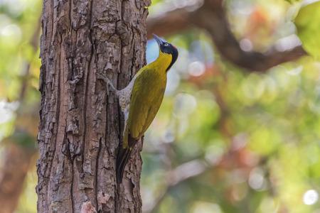 pies bonitos: Woodpecker es un pájaro de un lugar muy único. Es el único pájaro que tiene un árbol vivo hueco o cavidad de árboles.
