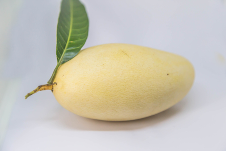 Mango trees in the genus Mangifera, a tropical fruit tree in the family. Anacardiaceae Scientific name: Mangifera indica is a plant that originated in India. Stock Photo