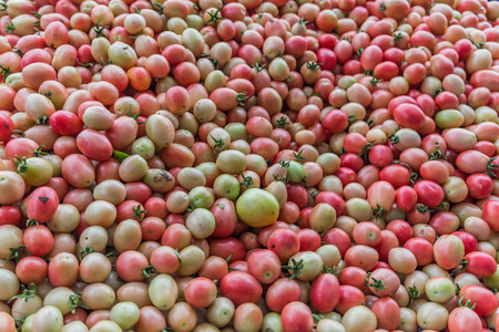 Tomato is a herbaceous plant was only one year is a shrub with upright stems covered downy leaves are alternately carries out leaflets of unequal size. Some small oval leaves are long round.