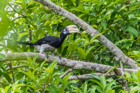 Hornbills are birds that are now extinct, that another kind of a weird stylized nature than other birds such as a male, the female will mate with their own life. Stock Photo