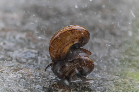 babosa: Snails are classified invertebrates. The Dallas Morning phylum. The creatures that are born in approximately the mid Carboniferous ferrous.