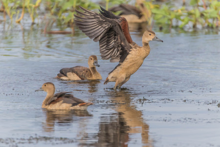 Anatidae Is a family of birds in the general appearance of the birds in this family ... is a body of water birds fort. Signup feature large flat mouth, short tails.