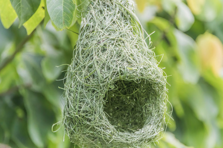 Nests are divided into various categories. The nature and quality varies and there is ... home Created certainly inferior quality birds nest at home, then its natural.