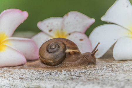slow motion: Snails are classified invertebrates. The Dallas Morning phylum. The creatures that are born in approximately the mid Carboniferous ferrous.
