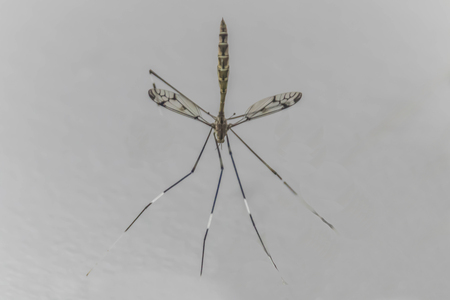 Mosquitoes that cause problems to the community. Annoying Is a major carrier of disease, such as dengue fever. And malaria etc.