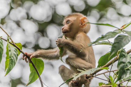 Monkey or ape is the common name of the chordate phylum. Floor mammal Rated apes (Primates) manner similar to humans.