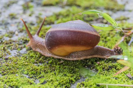 carboniferous: Snails are classified invertebrates. The Dallas Morning phylum. The creatures that are born in approximately the mid Carboniferous ferrous.