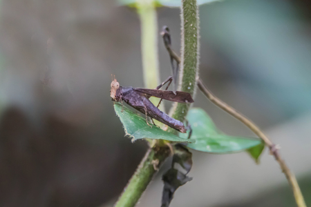 Locusts, grasshoppers have short antennae almost a mirror of a shortened. Gu shorter species of locusts that sounds simple. Hide legs caused by rubbing their wings.