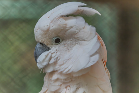 Parrots or birds hookworm (English: Parrot) is one of the birds. The scientific name Psittaciformes. The birds have a very different physiology. Is available from small to large.