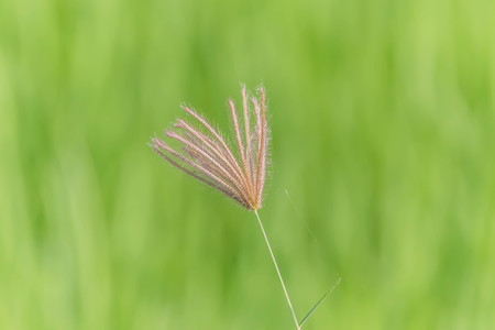 Flower grass is a naturally occurring flower. Available in all regions of the world. Some beautiful species are fragrant.