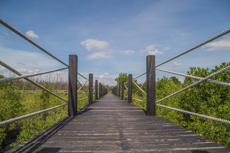 The bridge leads to the mangrove forest at the end of the bridge before the walk back. This area is densely populated with mangroves. Stock Photo