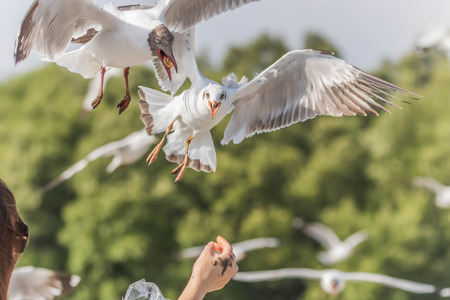 Close up bird catch food from human hand