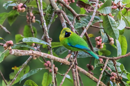 List of birds is a collection of birds in each family. Genus and species worldwide It is easy to find a study on the life cycle of birds. Stock Photo