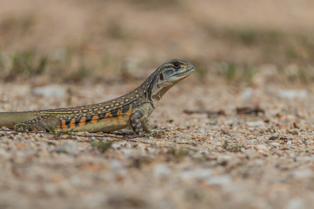 Nothing tricky, and all kinds of animals living in the ground. No tree like reptile species. The ground is dry, sandy soil. The address of the lizard's hole A cavity The back can be