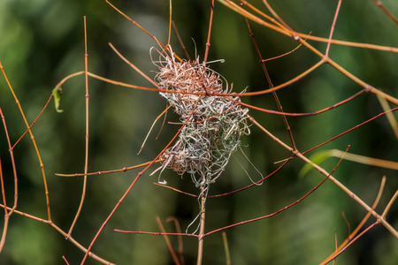 Nests are divided into various categories. The nature and quality varies and there is ... home Created certainly inferior quality bird's nest at home, then it's natural.