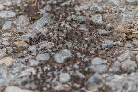 Ants are a kind of insect in the Formicidae family. We see ants in all places, except in Antarctica that has ice covered all year. Ants are social creatures with many abilities.