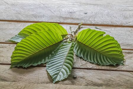 The leaves make food by photosynthesis process. Leaf size and shape and is divided into two different types according to the different characteristics.