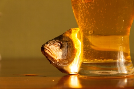 Beer and fish photo