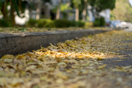 A lot of leaves with various yellow tone colour have fallen down on to the road in autumn.