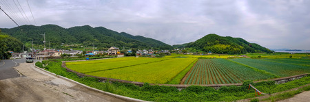 Panorama of rice paddy fields in urban area of South Korea with town and mountain and sea in the background.