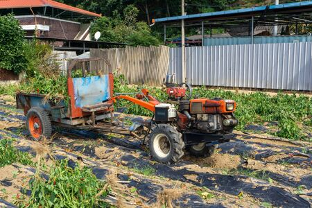 Two-wheel tractor or walking tractor connected to the truck Trailer is on the chillies paddy field in the South Korea.