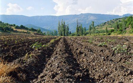 tillage: Tillage in the autumn in the Crimea, Ukraine