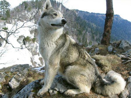 sgomento: cane sulla foresta  Archivio Fotografico
