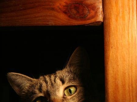furtive: Furtive cat