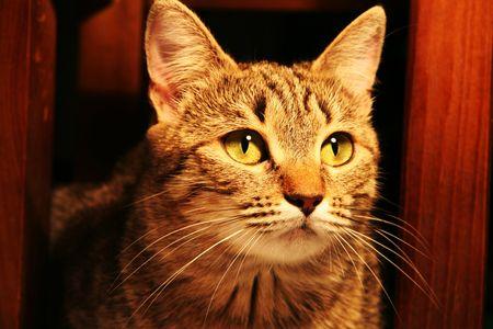 artful: Cat for green eye Stock Photo