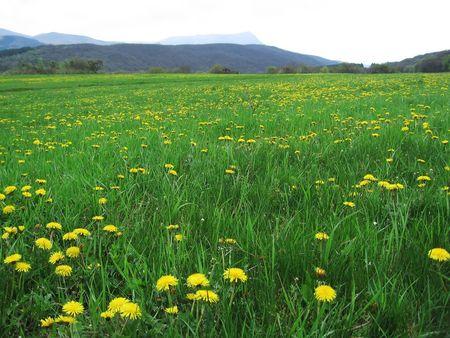 crimea: grassland in Crimea