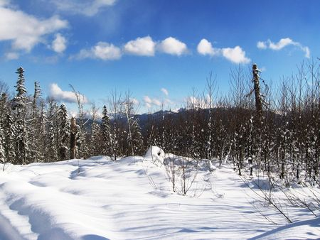 Joyful winter picture photo