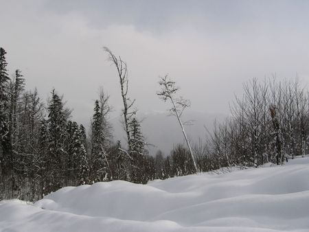 woodscape: Winter forest in Caucasus mountains,Russia