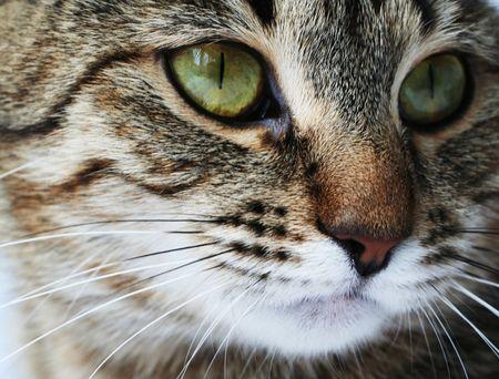 whiskar: Cat close-up