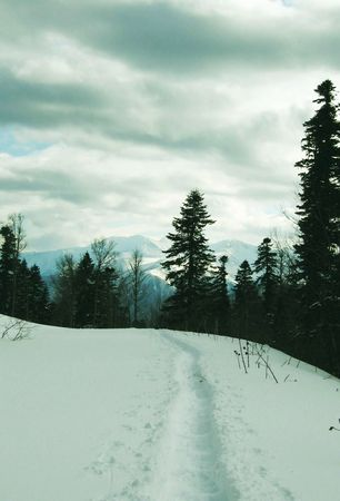 woodscape: Snowcivered path in the Caucasus mountain