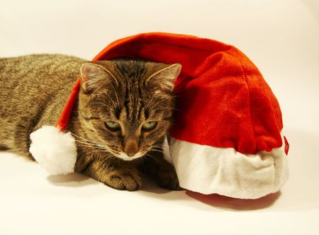 Clause hat  and cat photo