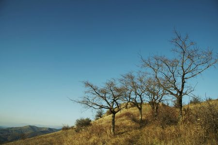 woodscape: Three trees of autumn grassland Stock Photo