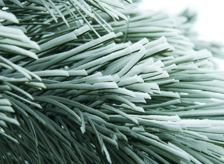 snowcovered: Snowcovered pine branch Stock Photo