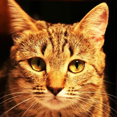 cats portrait Stock Photo