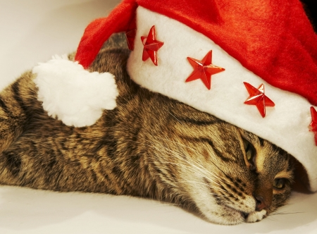 Clause hat  and relaxing cat photo