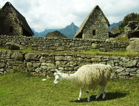 the lost city of the incas: Ruins and llama in the lost incas city Machu-Picchu,Peru
