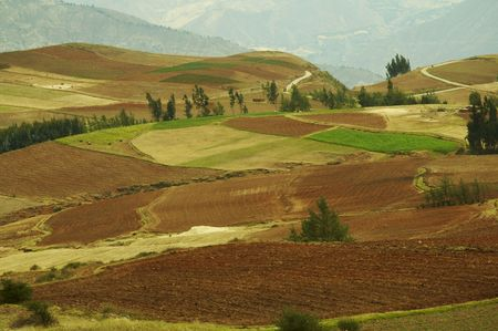 fresian: Colorful fields in Andes,Peru
