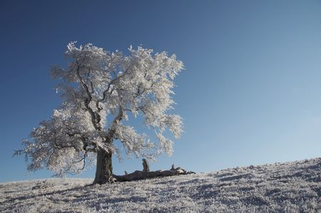 Alone frozen tree on the blue background Stock Photo - 689021