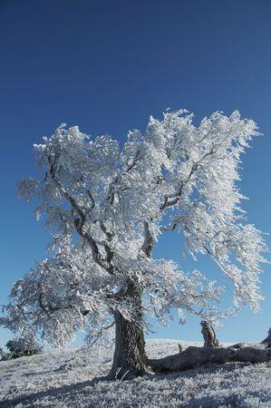 Beautiful alone white tree on winter grassland Stock Photo - 688995
