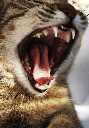 chap: Cat open chap