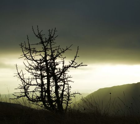 woodscape: Tree silhouette in Crimea mountain for autumn