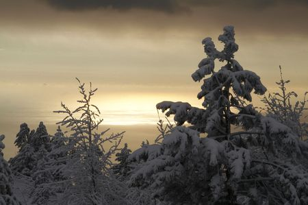 Winter snowcovered hill and small pine photo