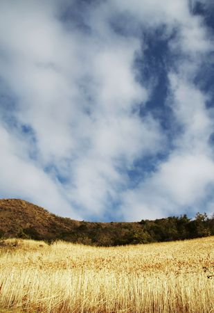 Yellow field,hill and blue Stock Photo - 726244