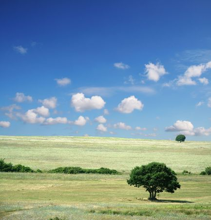 Summer field - Landscape green grass, blue sky and white clouds Stock Photo - 738866