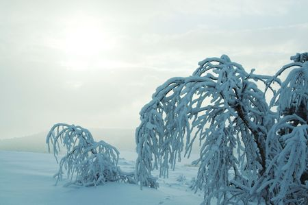 Frozen trees in the mountain in Crimea Stock Photo - 752439